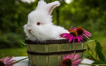 цветы, ушки, кролик, животное, корзинка, зайчик, ведро
