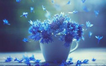 цветы, лепестки, доски, кружка, чашка, васильки