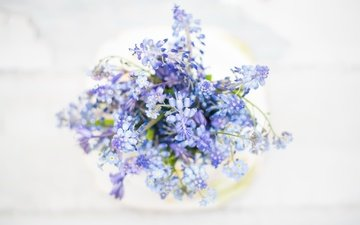 flowers, macro, background, bouquet, forget-me-nots, wildflowers, muscari