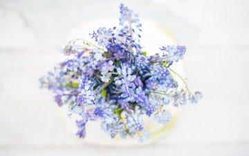 цветы, макро, фон, букет, незабудки, полевые цветы, мускари
