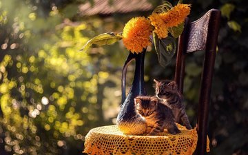 flowers, nature, animals, chair, cats, vase, kittens, napkin, bokeh