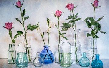 flowers, roses, glass, bottle, still life, banks, vases