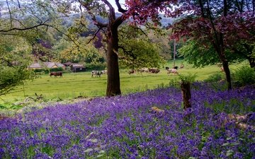 flowers, grass, trees, greens, forest, uk, houses, bells, lawn, cows