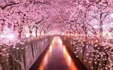 деревья, цветение, мост, весна, сакура