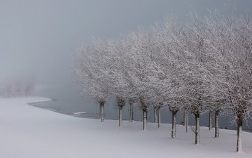 trees, lake, snow, winter, frost, ice