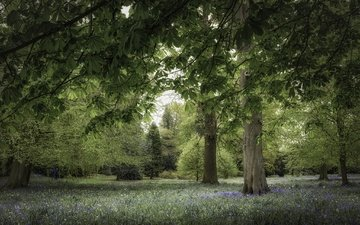 flowers, trees, park, branches, chestnut