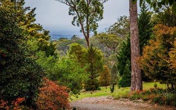 деревья, парк, кусты, осень, тропинка, австралия, mount lofty botanic garden
