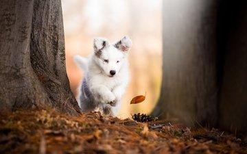 trees, nature, leaves, trunks, autumn, dog, puppy, animal, bump, cecilia zuccherato