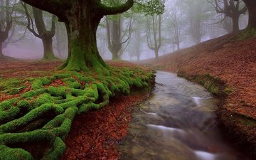trees, nature, stream, autumn, moss, roots, spain