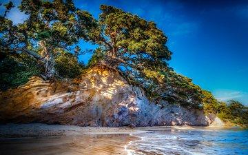 небо, деревья, скалы, море, склон, побережье, океан, новая зеландия