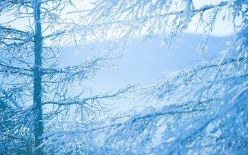 деревья, снег, зима, ветки