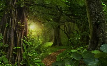 trees, the sun, greens, forest, leaves, path, tropics, jungle