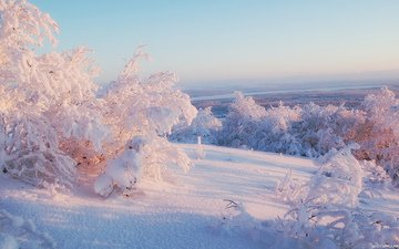 the sky, light, trees, snow, winter, horizon, frost