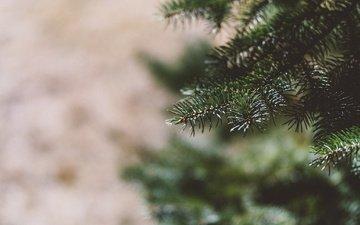 дерево, елка, хвоя, ветки, размытость, иголки, боке