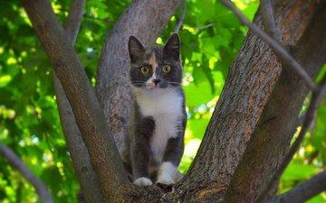 дерево, кошка