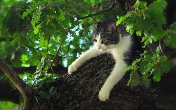 дерево, листья, кот, мордочка, усы, кошка, взгляд, лапки