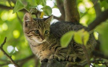 дерево, листья, кот, мордочка, усы, ветки, кошка, взгляд, котенок