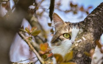 tree, leaves, cat, muzzle, mustache, branches, look, animal, eyes
