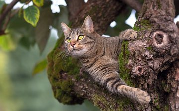 tree, leaves, cat, muzzle, mustache, look, moss, animal, trunk