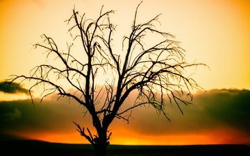 nature, tree, sunset, branches, silhouette