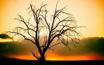 природа, дерево, закат, ветки, силуэт