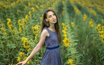 цветы, девушка, платье, поле, лето, взгляд, волосы, лицо, подсолнухи