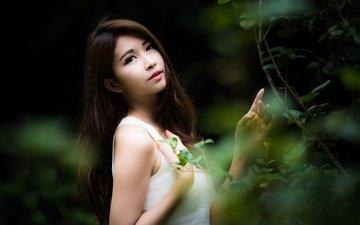 листья, девушка, ветки, взгляд, волосы, лицо, азиатка, боке