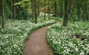 дорога, цветы, деревья, зелень, парк, стволы, тропинка, весна, белые цветы, richard crox