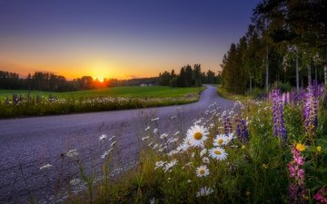 road, flowers, trees, sunset, landscape, field, wildflowers, finland