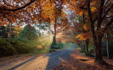 дорога, деревья, лучи солнца, осень, блэкхит, голубые горы, derek zhang