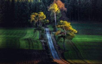 дорога, деревья, лес, поля, поле, осень
