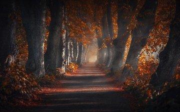дорога, деревья, природа, парк, осень, аллея