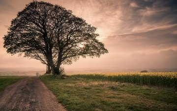 небо, дорога, трава, дерево, утро, туман, поле, рапс, brian kerr photography