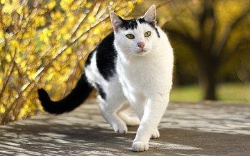дорога, природа, дерево, кот, ветки, листва, кошка, осень, улица, прогулка, зеленые глаза