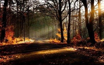дорога, деревья, природа, лес, листья, осень, солнечный свет