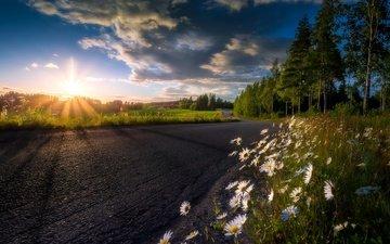 небо, дорога, цветы, облака, деревья, утро, лето, ромашки