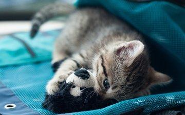 фон, кот, кошка, котенок, игрушка, ткань, игра
