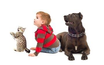 фон, кот, собака, ребенок, мальчик, друзья, дитя, друганы