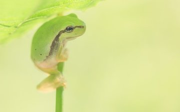 background, sheet, frog, stem, legs, bokeh