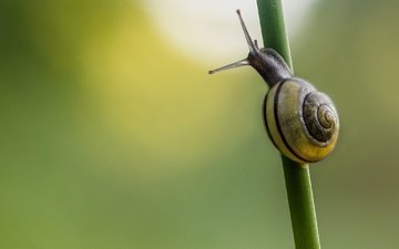 background, stem, snail, grass