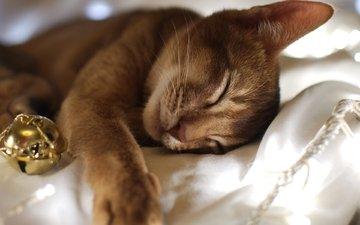 глаза, морда, кот, мордочка, усы, кошка, сон, лежа