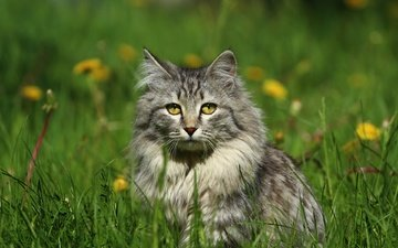 eyes, flowers, grass, cat, muzzle, mustache, look