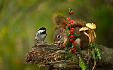 грибы, птица, ягоды, животное, белка, коряга, синица, грызун