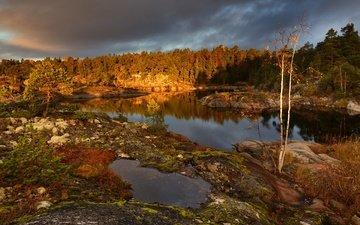 деревья, вечер, лес, осень, залив, карелия, пасмурно, архипелаг, ладога, шхеры, максим евдокимов