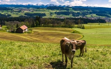 the sky, grass, clouds, trees, mountains, the sun, landscape, field, houses, forest, germany, meadows, cows, allgaeu