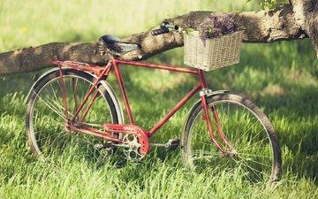 корзинка с цветами, старый велосипед
