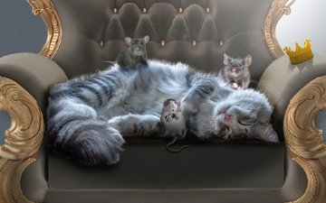 кот, мордочка, усы, кошка, кресло, мышки, крысы