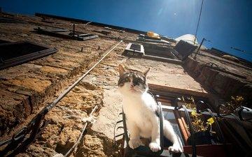 cat, muzzle, mustache, look, house, window