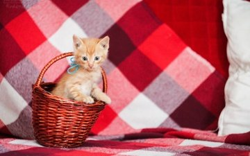 cat, muzzle, mustache, look, kitty, red, basket