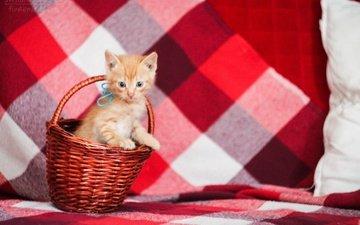 кот, мордочка, усы, кошка, взгляд, котенок, рыжий, корзинка